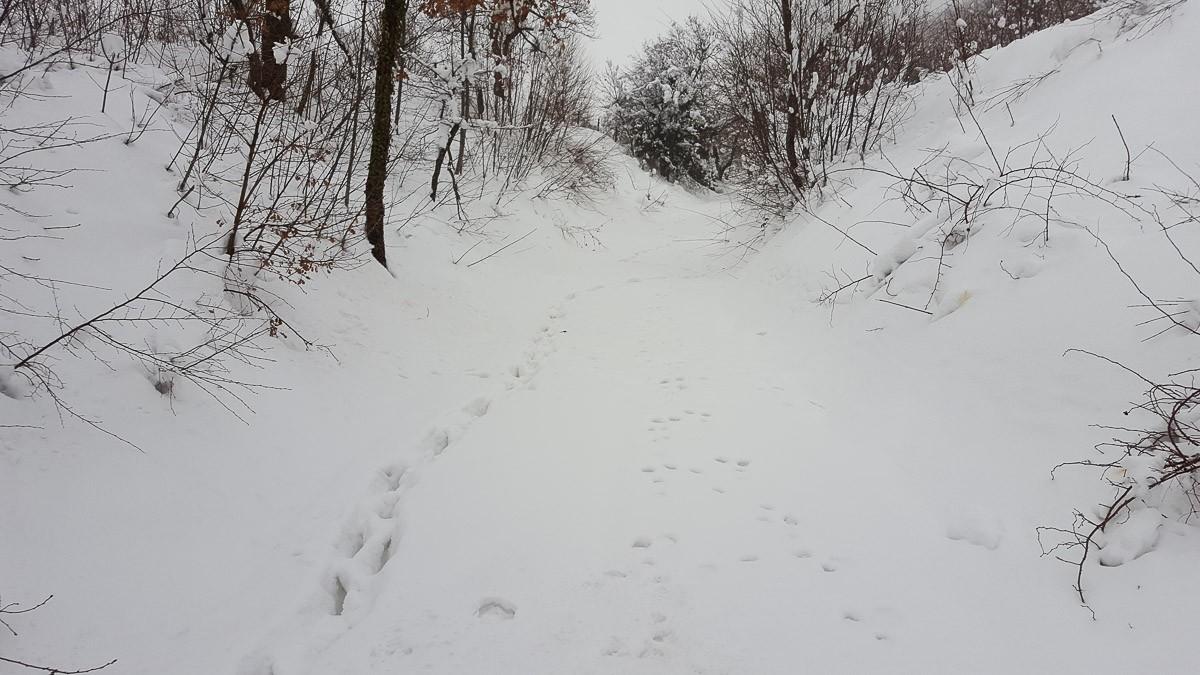 Le uniche tracce sono quelle degli animali, tantissime in tutte le direzioni. E' possibile riconoscere quelle di lupi caprioli e cinghiali
