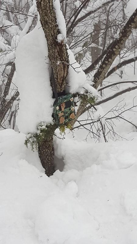 Una delle foto trappole posizionate a circa 2 metri da terra