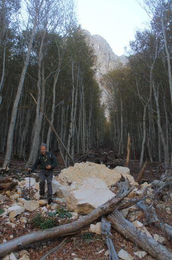 L'intaglio del bosco, netto e lunghissimo