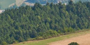 https://occhiodeisibillini.com/news/nordic-walking-trail-dei-castelli-caldarolaesi