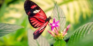 https://occhiodeisibillini.com/news/farfalla-falena-gonfiata