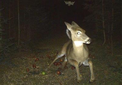 https://occhiodeisibillini.com/news/animali-immortalati-in-comportamenti-bizzarri