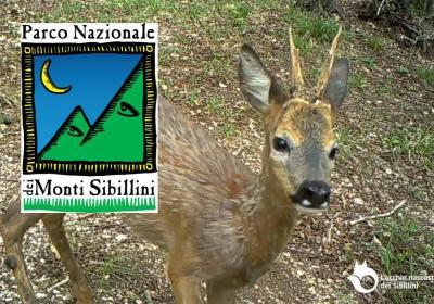 https://occhiodeisibillini.com/news/il-parco-nazionale-dei-monti-sibillini-parla-di-noi